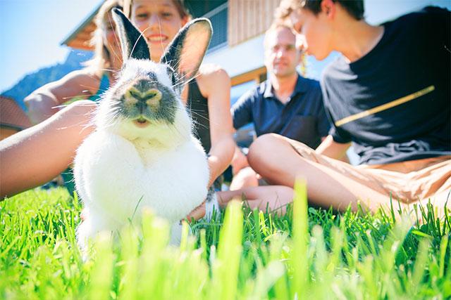 impfung-kaninchen-kleintierpraxis